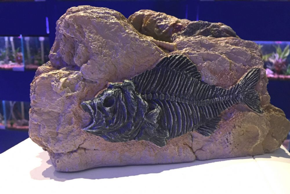 Large Piranha Fossil Rock Cave Aquarium Ornament - Prehistoric Fish Tank